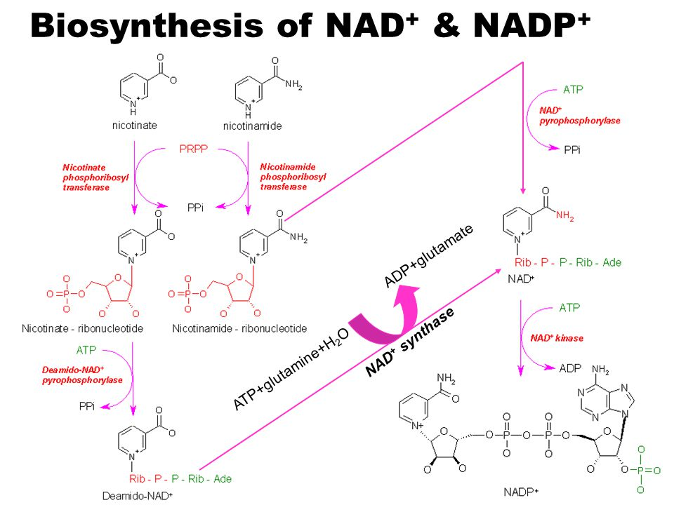 Biosynthesis of NAD+ & NADP+