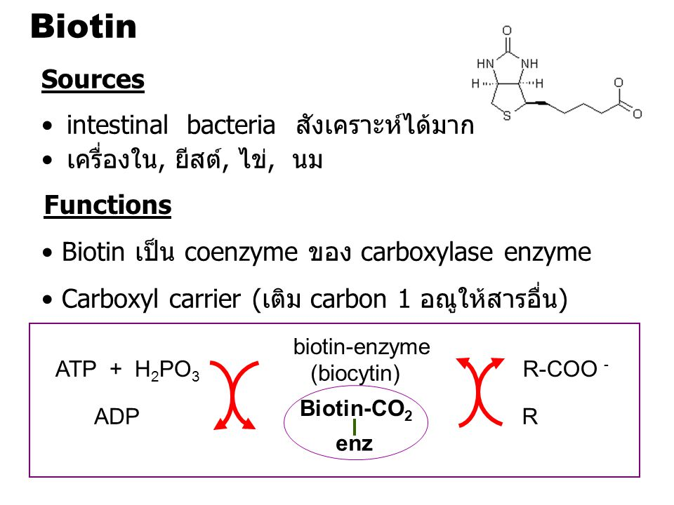 Biotin Sources intestinal bacteria สังเคราะห์ได้มาก