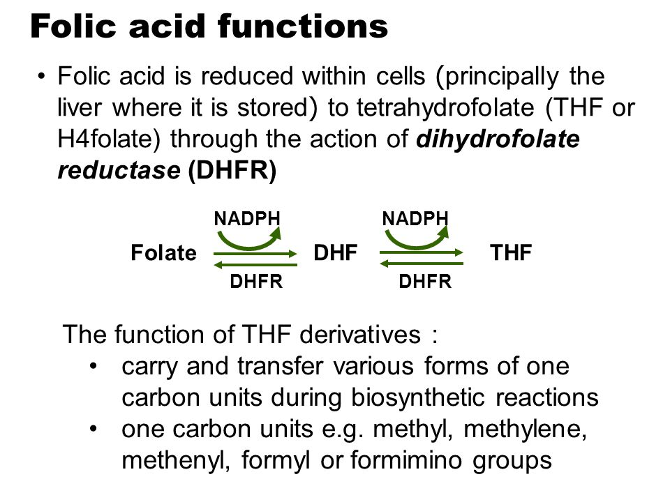 Folic acid functions