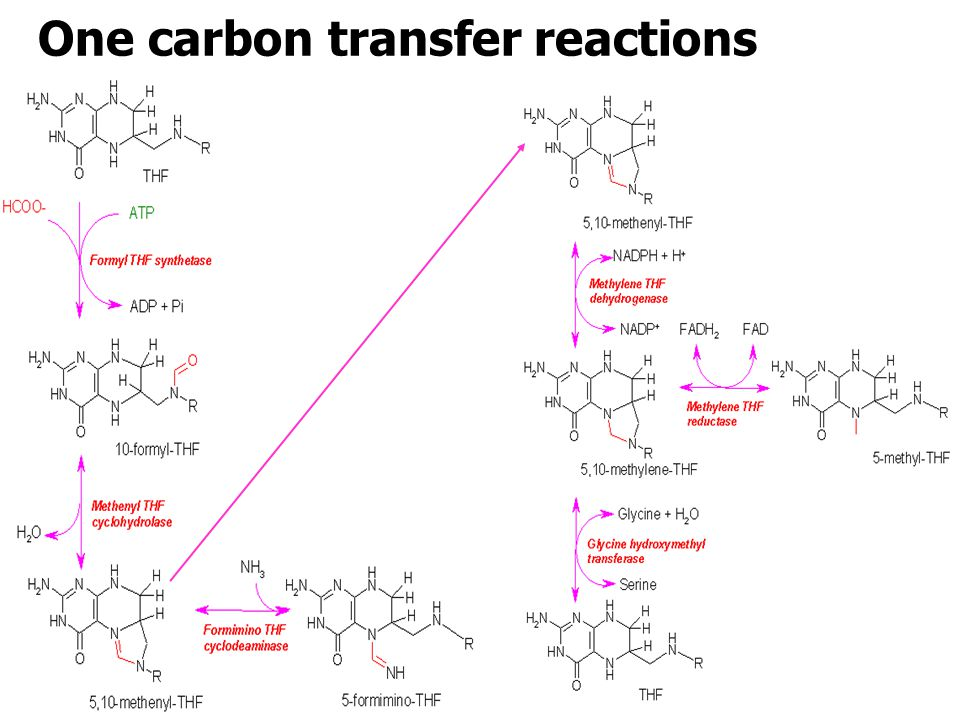 One carbon transfer reactions