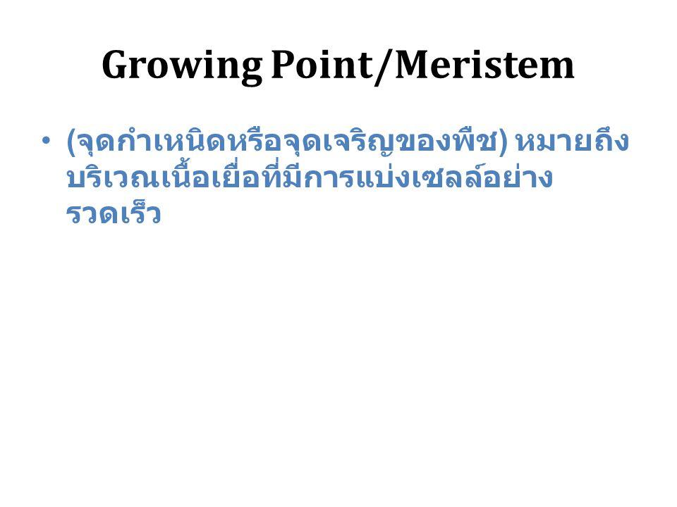 Growing Point/Meristem