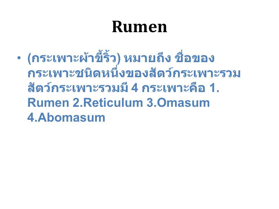 Rumen (กระเพาะผ้าขี้ริ้ว) หมายถึง ชื่อของกระเพาะชนิดหนึ่งของสัตว์กระเพาะรวม สัตว์กระเพาะรวมมี 4 กระเพาะคือ 1.