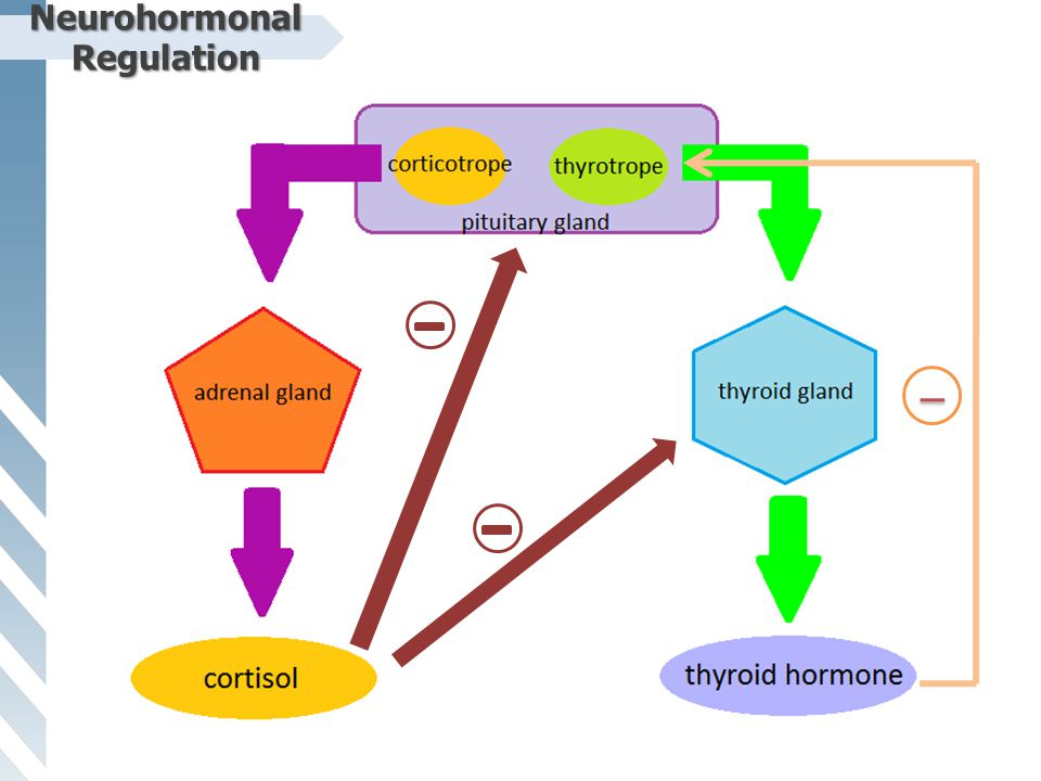 Neurohormonal Regulation