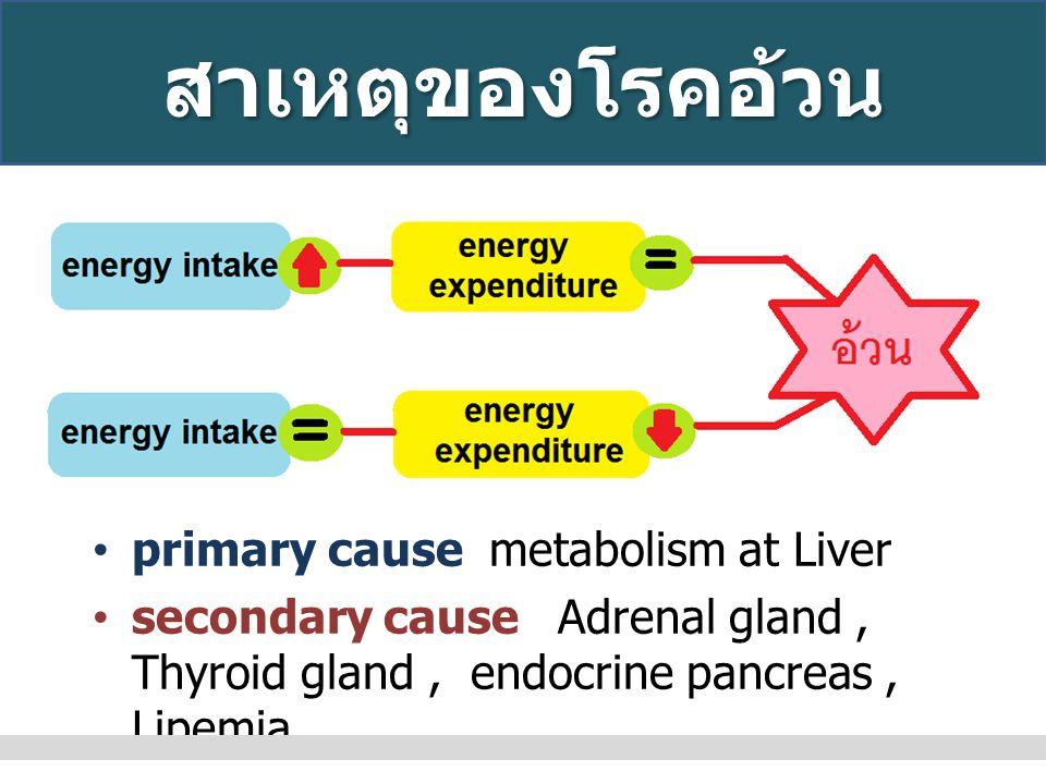 สาเหตุของโรคอ้วน primary cause metabolism at Liver