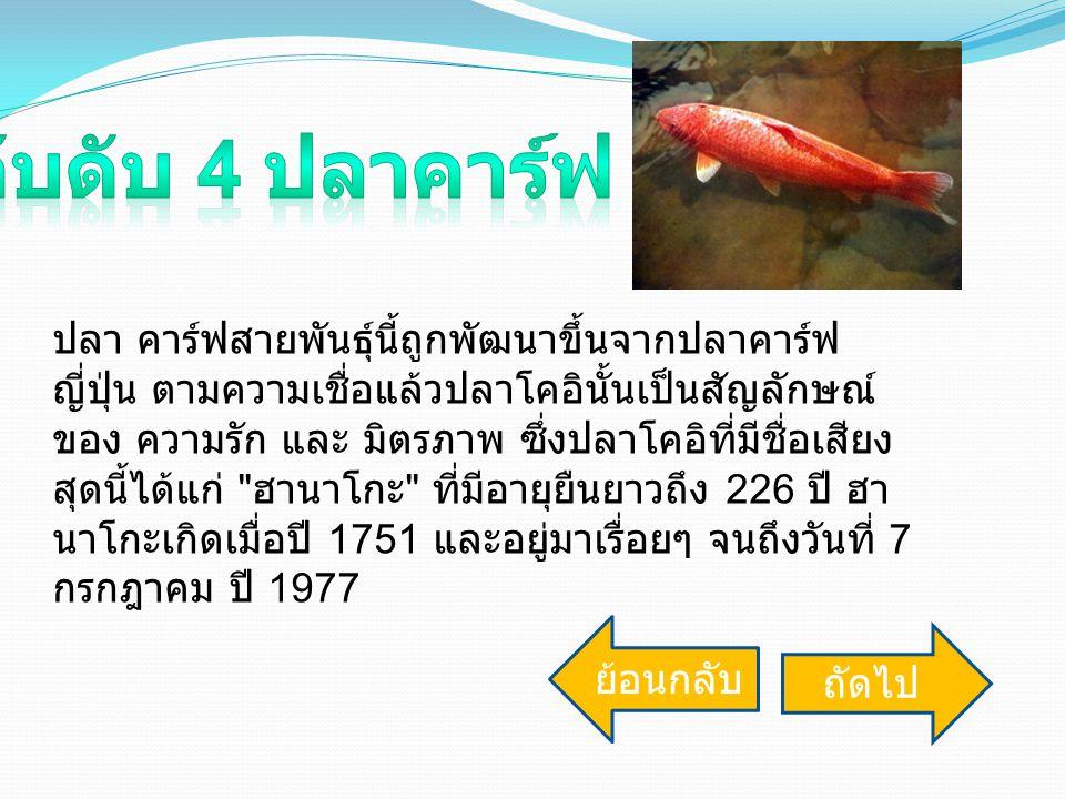 อับดับ 4 ปลาคาร์ฟ