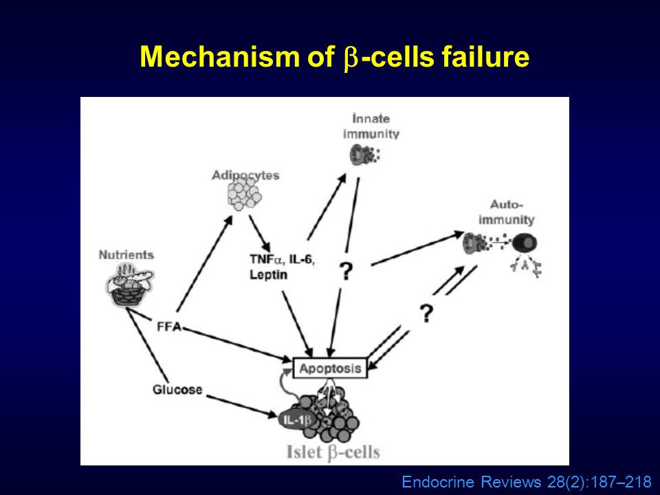 Mechanism of -cells failure