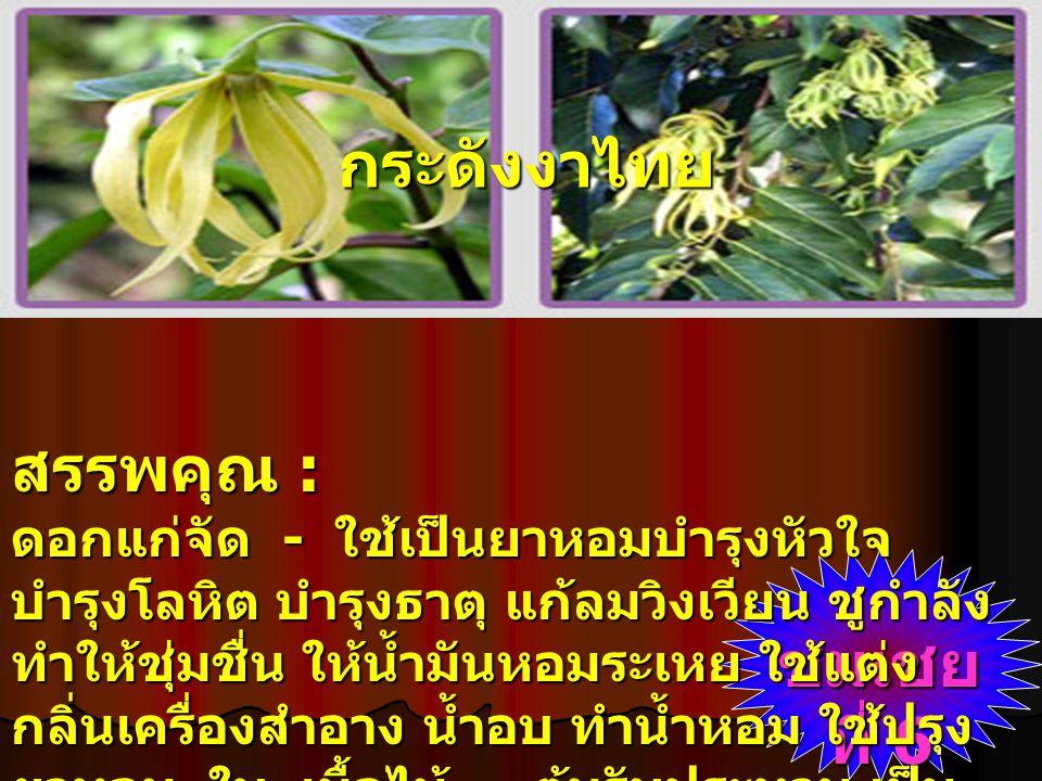 กระดังงาไทย สรรพคุณ :
