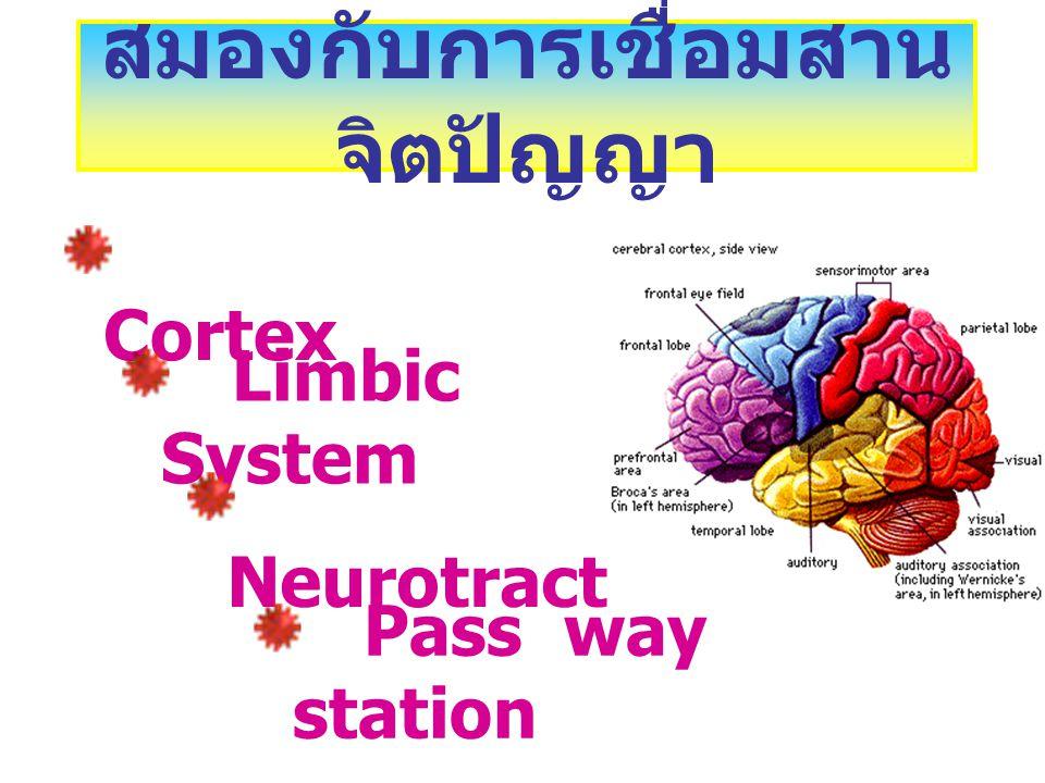 สมองกับการเชื่อมสานจิตปัญญา