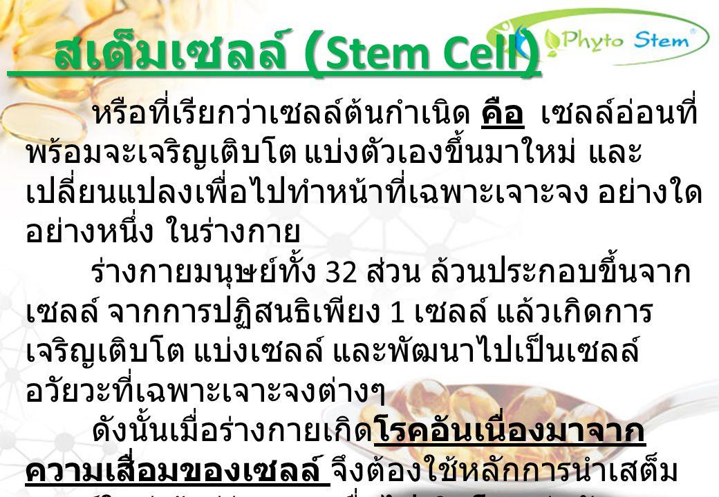 สเต็มเซลล์ (Stem Cell)