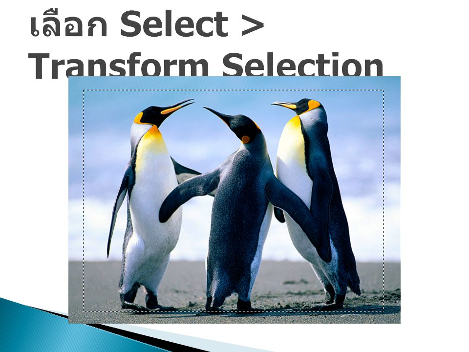 เลือก Select > Transform Selection