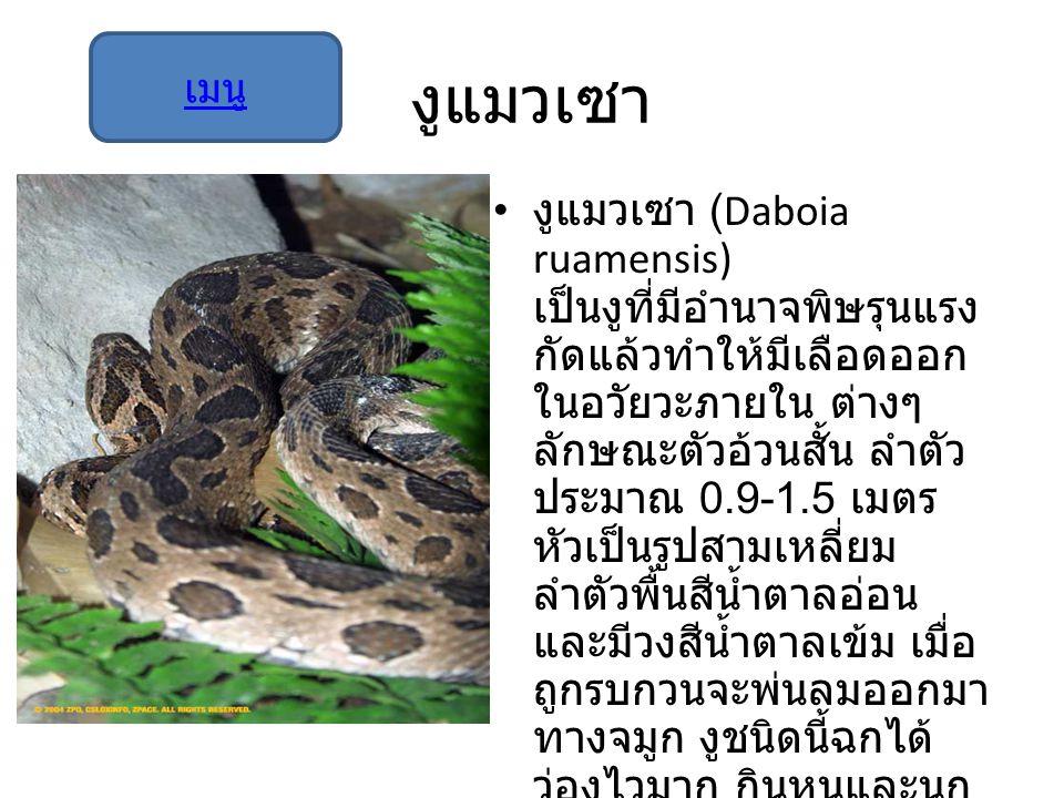 งูแมวเซา เมนู