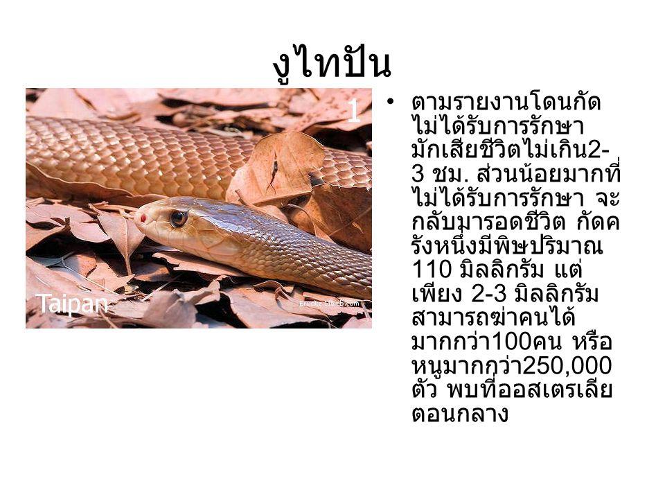งูไทปัน