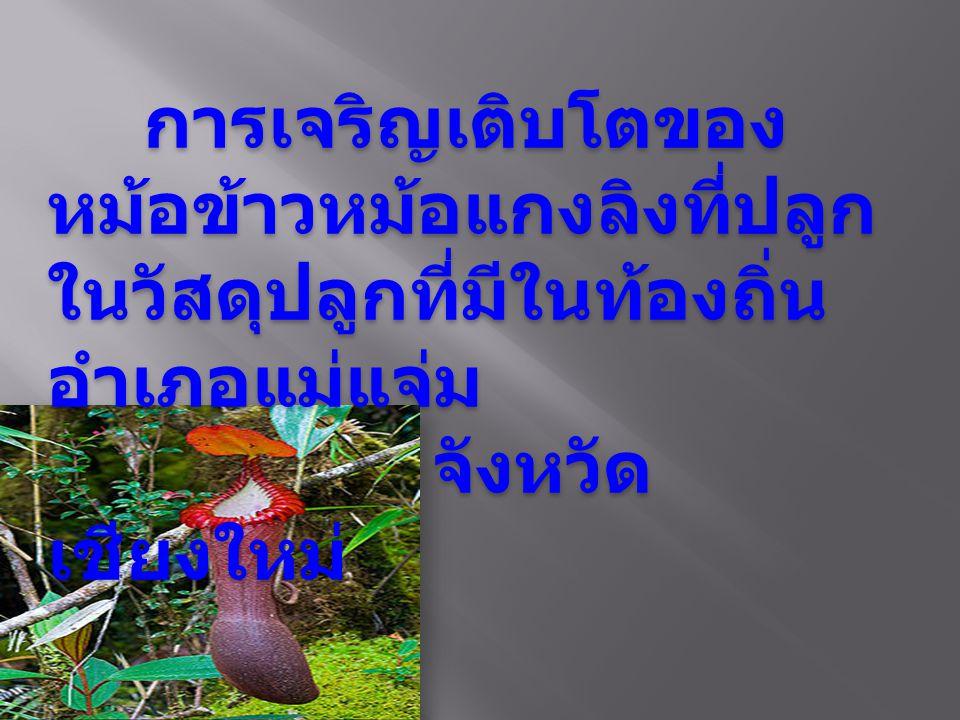 การเจริญเติบโตของหม้อข้าวหม้อแกงลิงที่ปลูกในวัสดุปลูกที่มีในท้องถิ่น