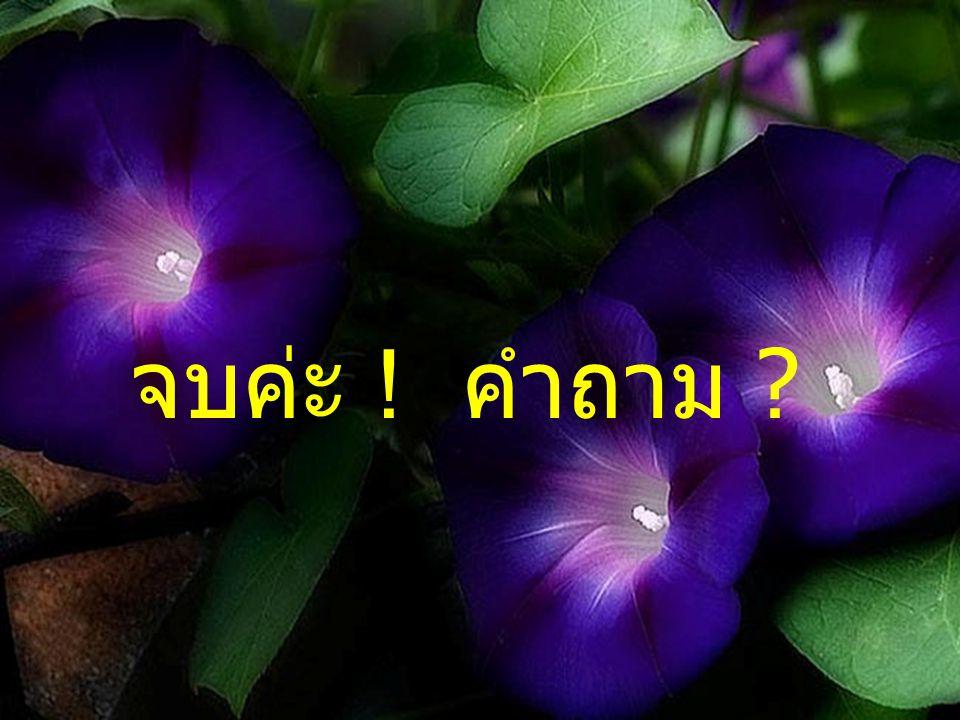จบค่ะ ! คำถาม