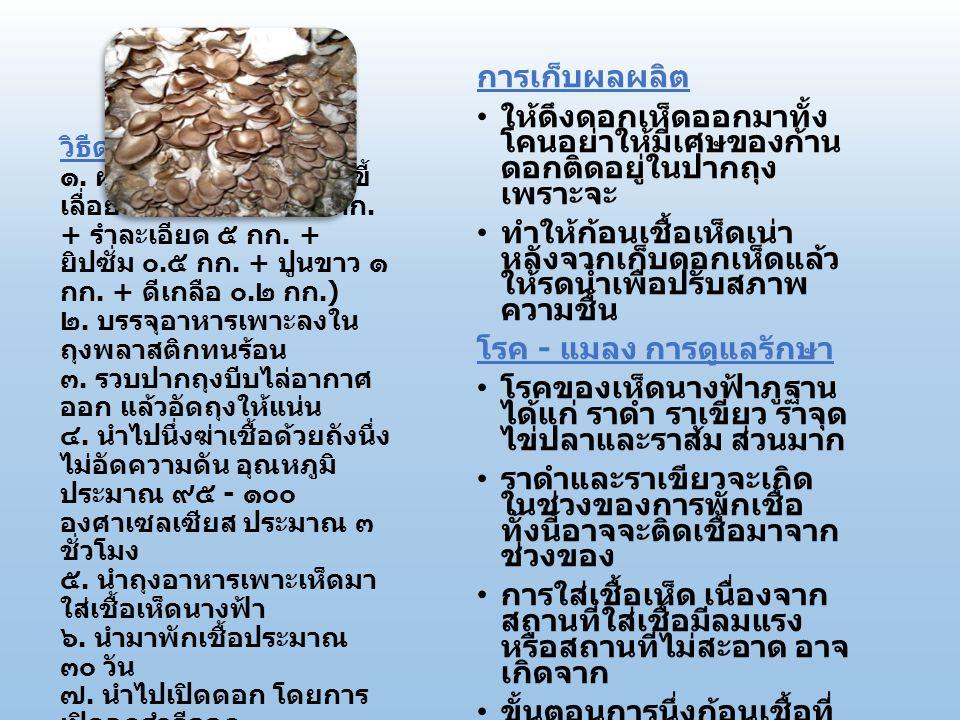 โรค - แมลง การดูแลรักษา