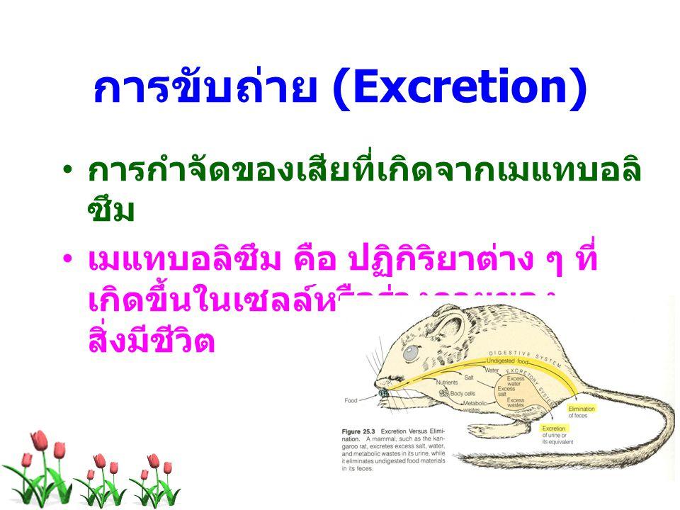 การขับถ่าย (Excretion)