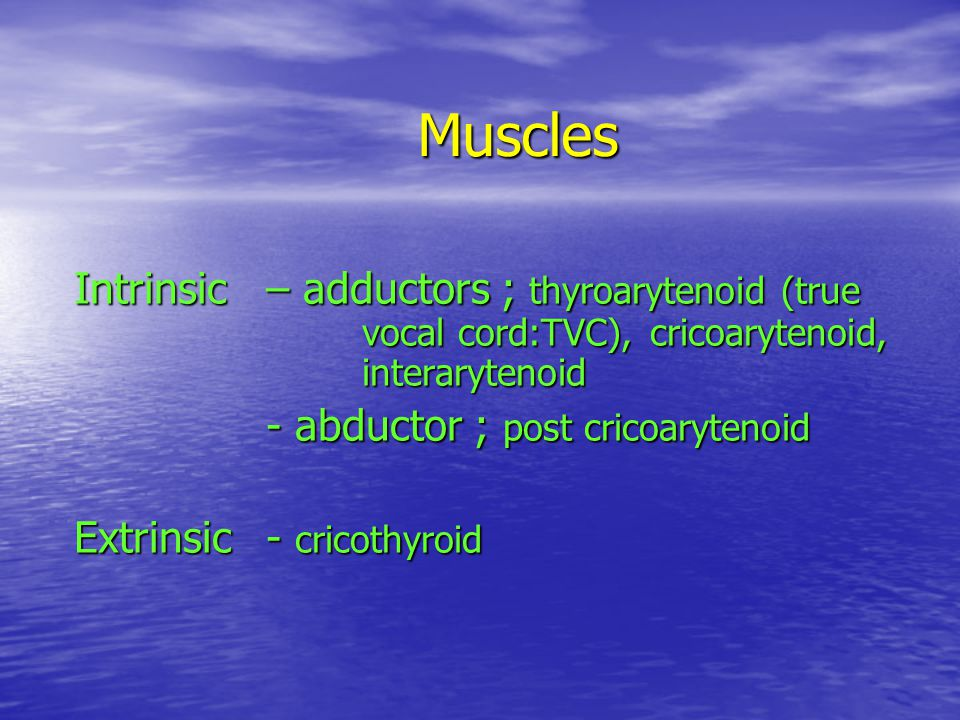 Muscles Intrinsic – adductors ; thyroarytenoid (true vocal cord:TVC), cricoarytenoid, interarytenoid.
