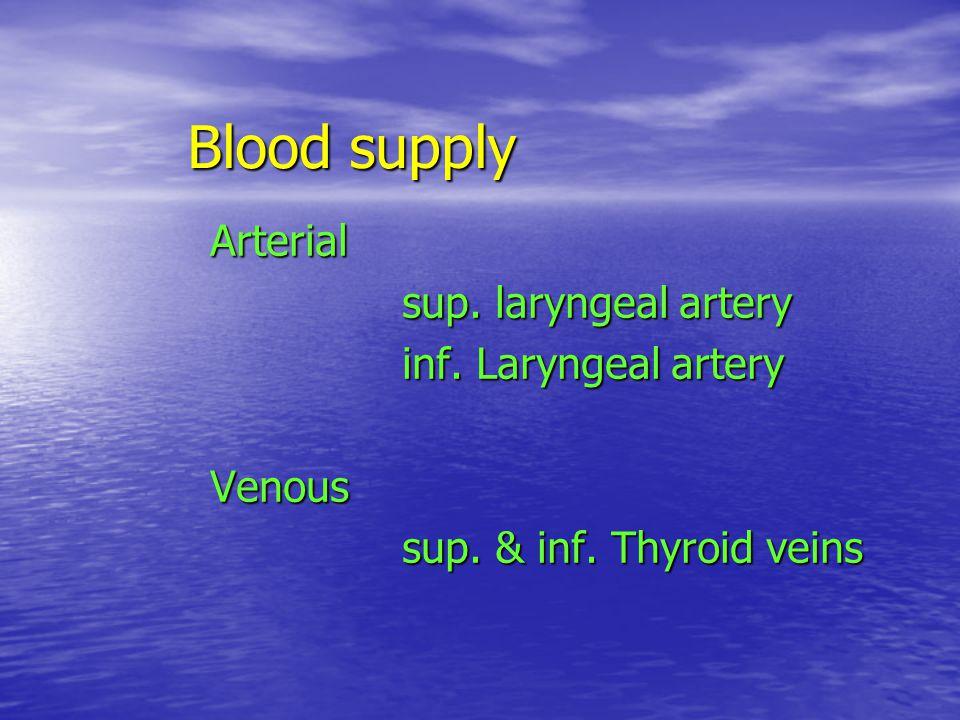 Blood supply Arterial sup. laryngeal artery inf. Laryngeal artery