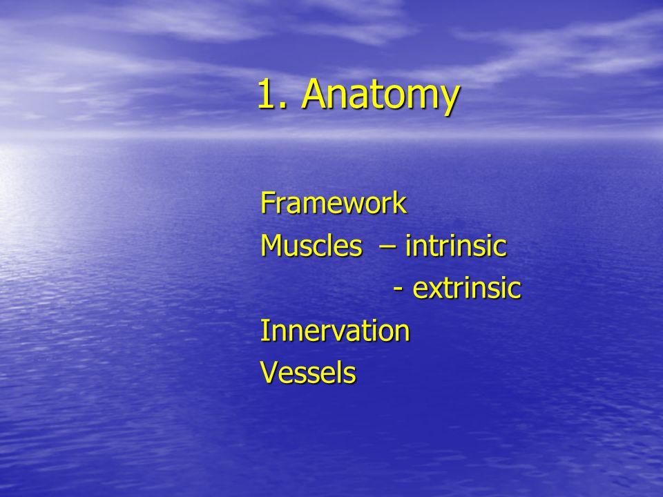 Framework Muscles – intrinsic - extrinsic Innervation Vessels