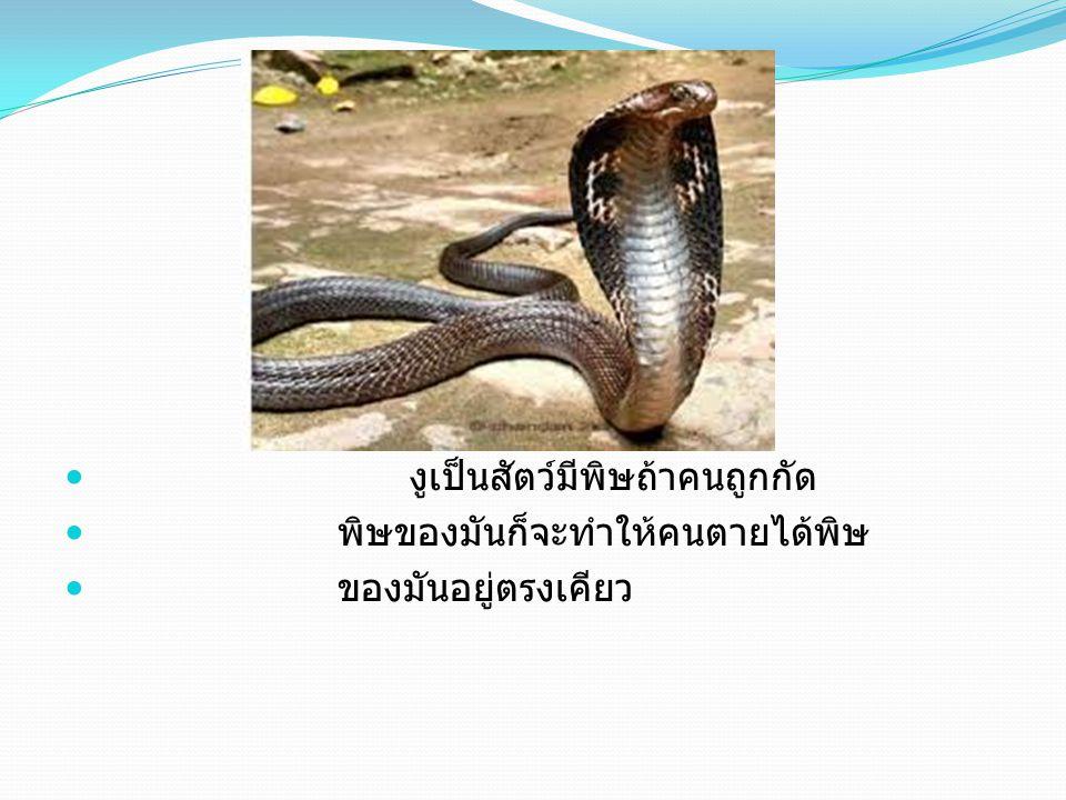 งูเป็นสัตว์มีพิษถ้าคนถูกกัด