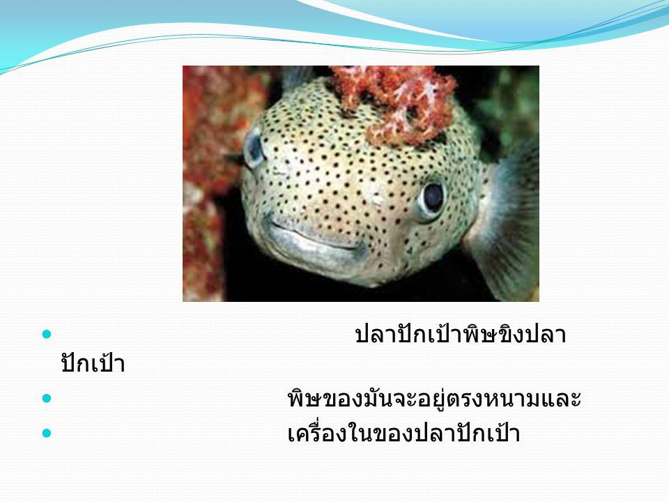 ปลาปักเป้าพิษขิงปลาปักเป้า