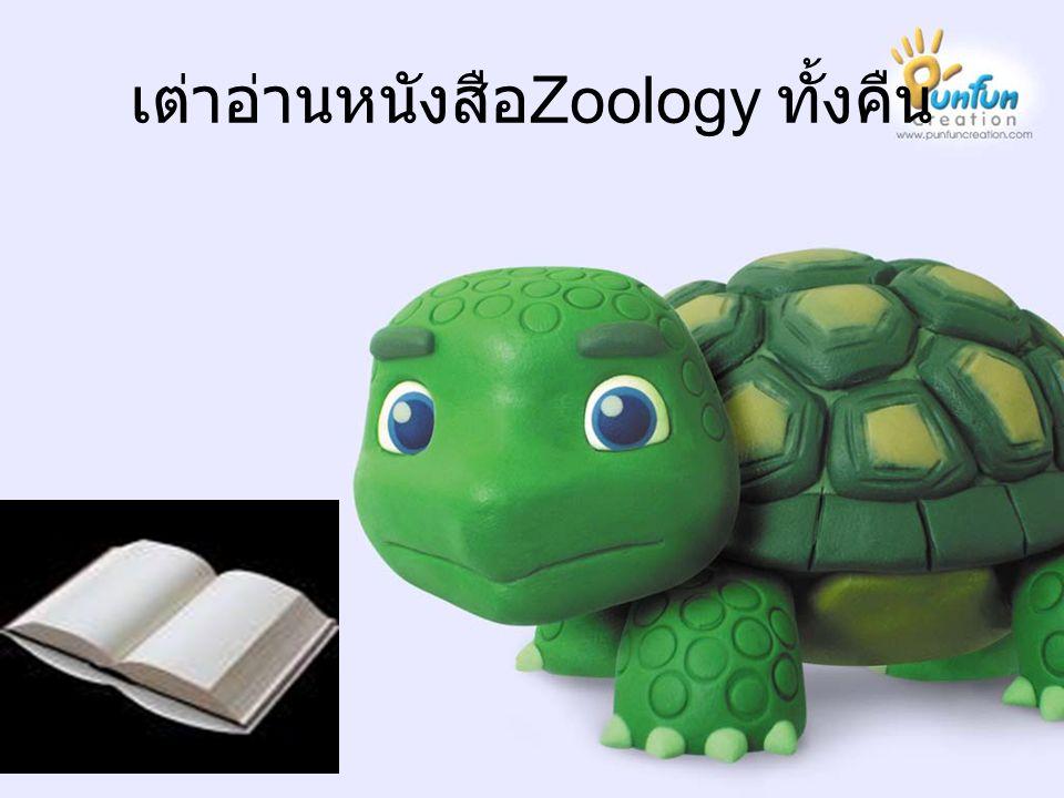 เต่าอ่านหนังสือZoology ทั้งคืน