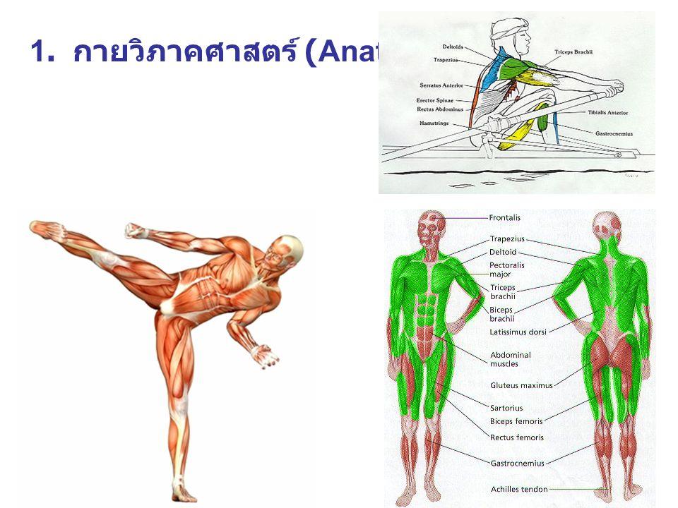 1. กายวิภาคศาสตร์ (Anatomy)