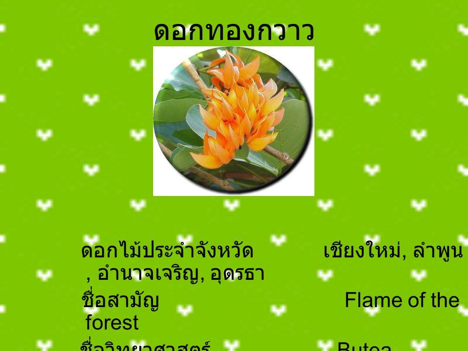 ดอกทองกวาว ชื่อสามัญ Flame of the forest