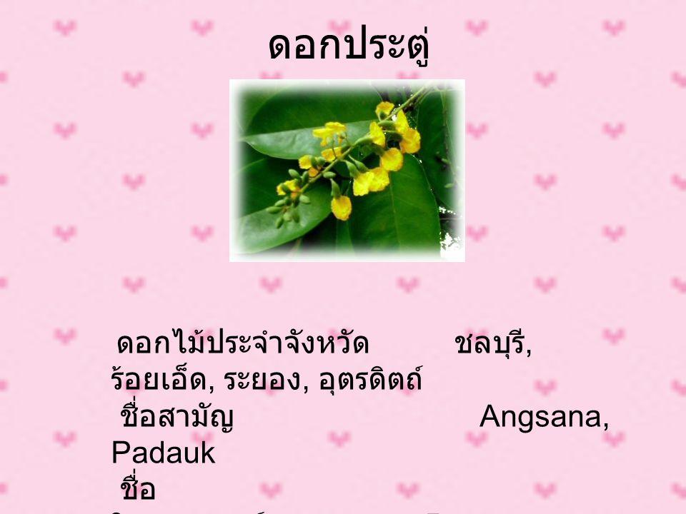 ดอกประตู่