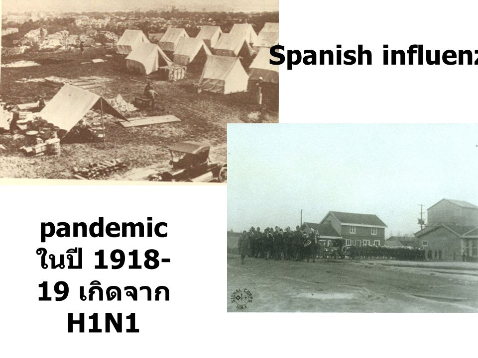 pandemic ในปี 1918-19 เกิดจาก H1N1