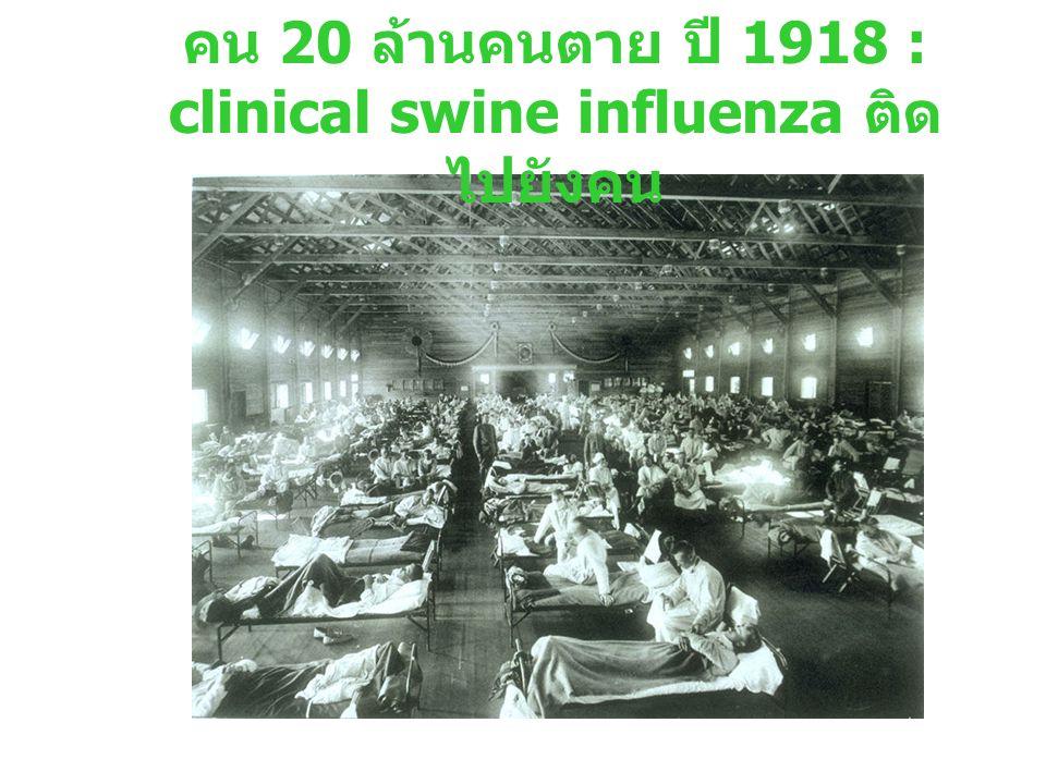 คน 20 ล้านคนตาย ปี 1918 : clinical swine influenza ติดไปยังคน
