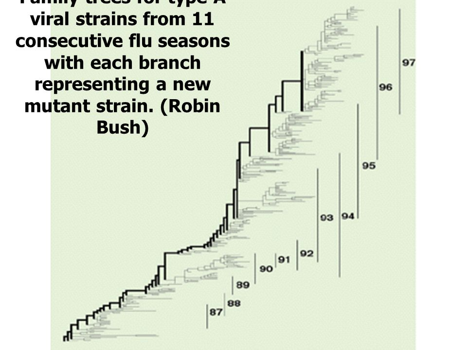 Family trees for type A viral strains from 11 consecutive flu seasons with each branch representing a new mutant strain.