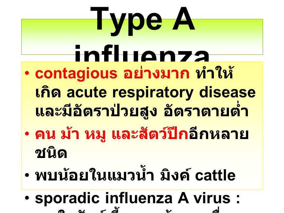 Type A influenza contagious อย่างมาก ทำให้เกิด acute respiratory disease และมีอัตราป่วยสูง อัตราตายต่ำ.