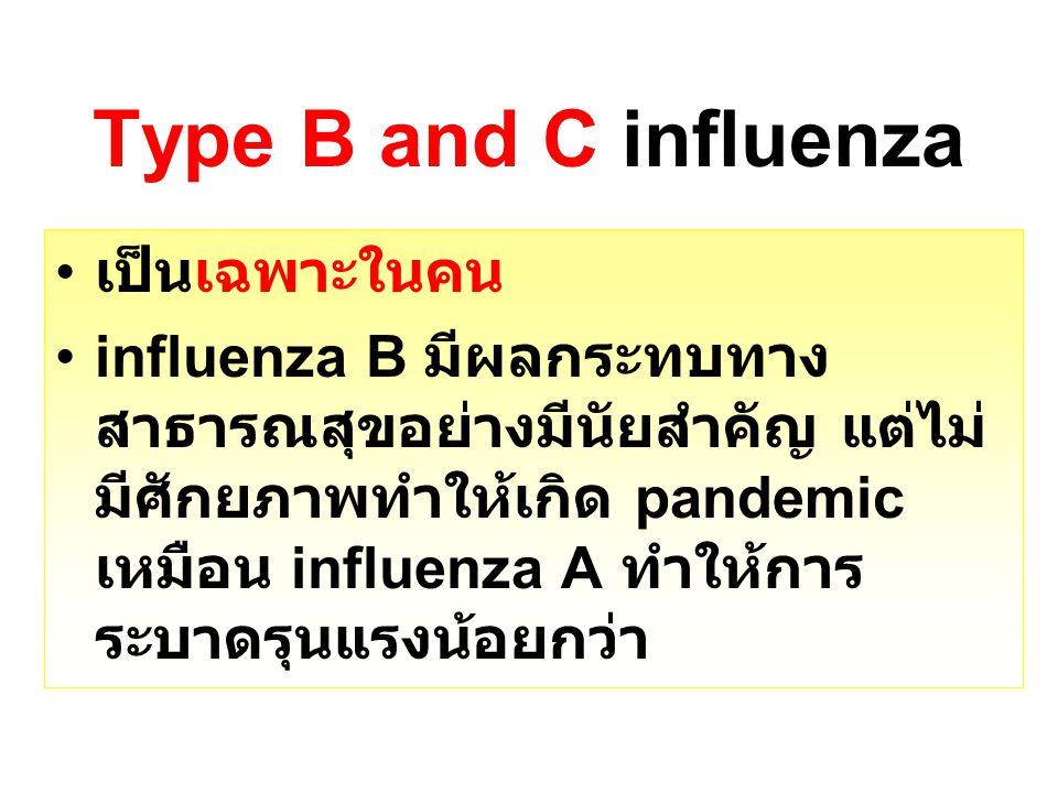 Type B and C influenza เป็นเฉพาะในคน