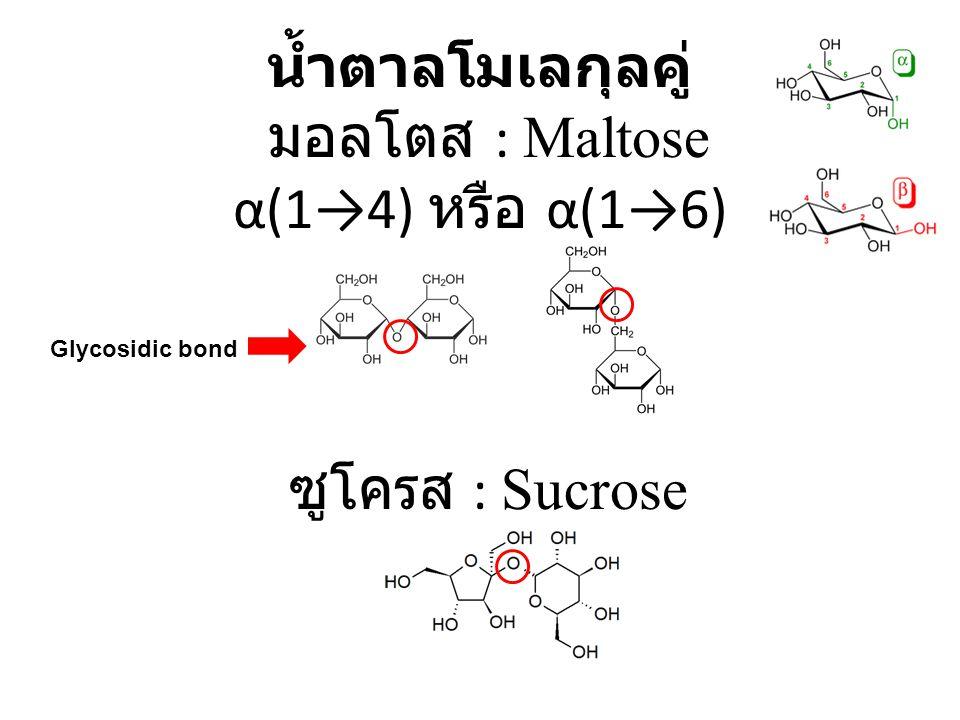 น้ำตาลโมเลกุลคู่ มอลโตส : Maltose α(1→4) หรือ α(1→6) ซูโครส : Sucrose