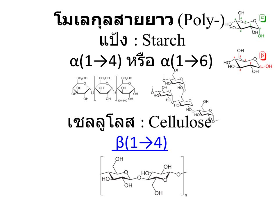 โมเลกุลสายยาว (Poly-) แป้ง : Starch α(1→4) หรือ α(1→6) เซลลูโลส : Cellulose β(1→4)