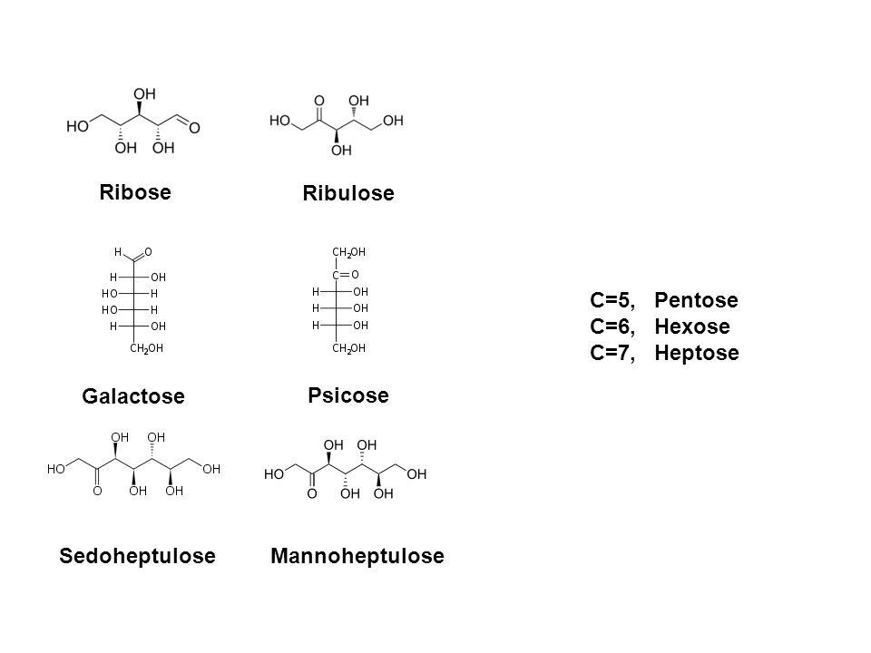 Ribose Ribulose. C=5, Pentose. C=6, Hexose. C=7, Heptose. Galactose. Psicose. Sedoheptulose.