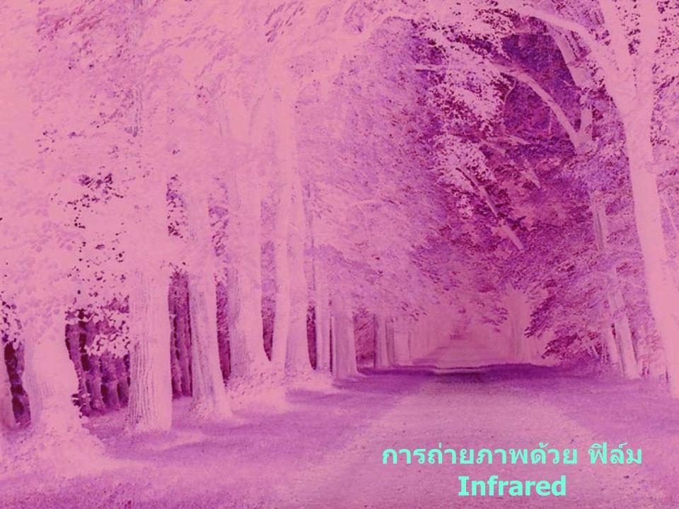 การถ่ายภาพด้วย ฟิล์ม Infrared