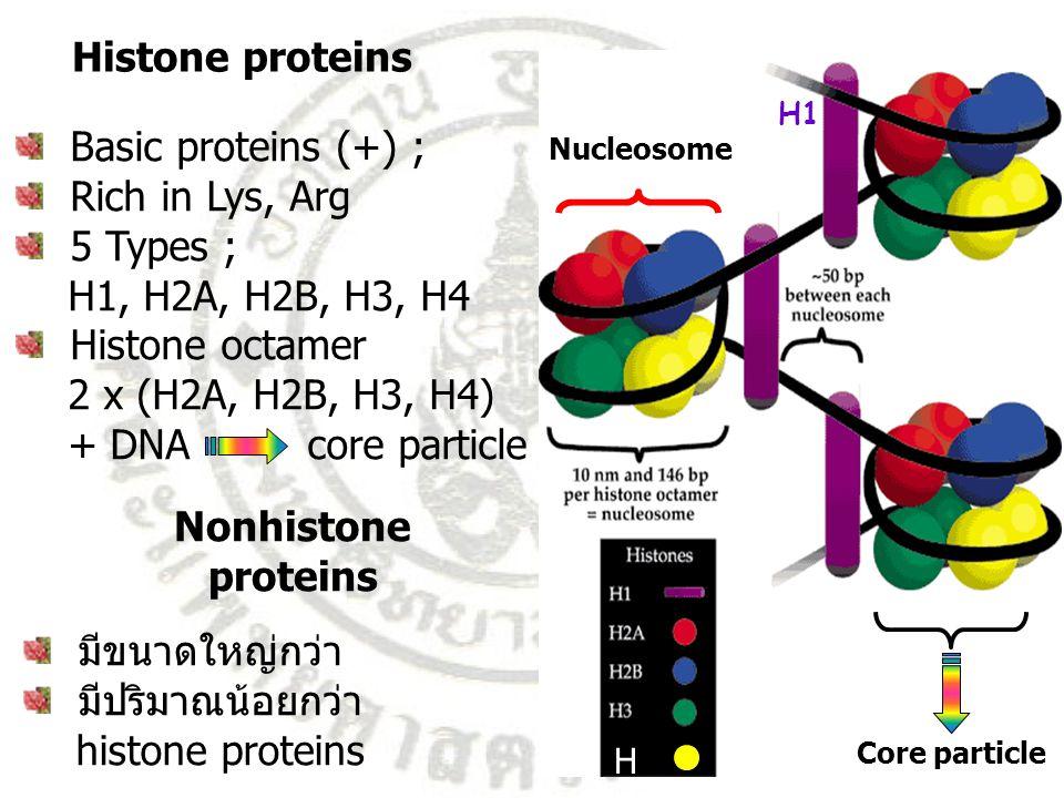 Histone proteins Nonhistone proteins