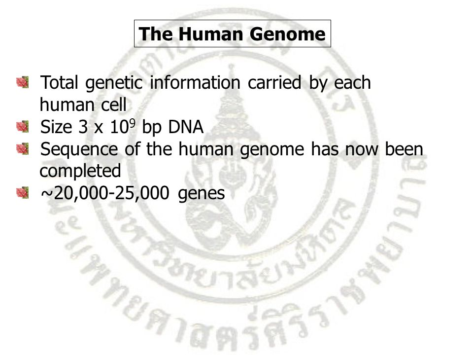 The Human Genome Total genetic information carried by each. human cell. Size 3 x 109 bp DNA. Sequence of the human genome has now been.