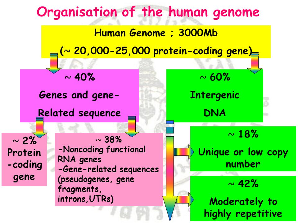 Organisation of the human genome