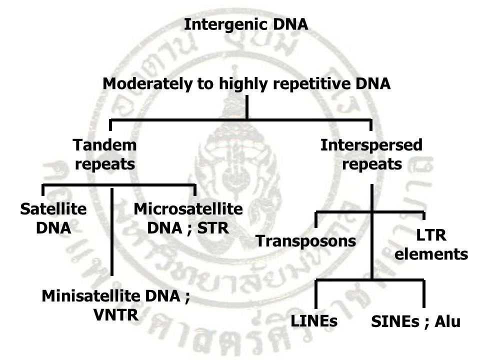 Moderately to highly repetitive DNA