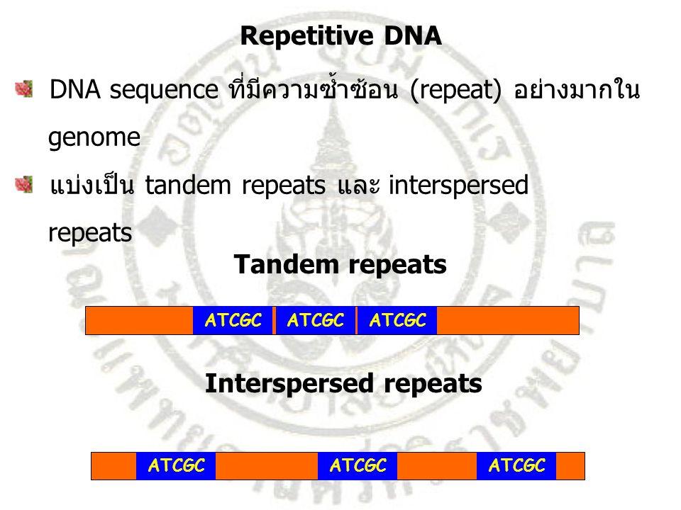 Repetitive DNA Tandem repeats Interspersed repeats
