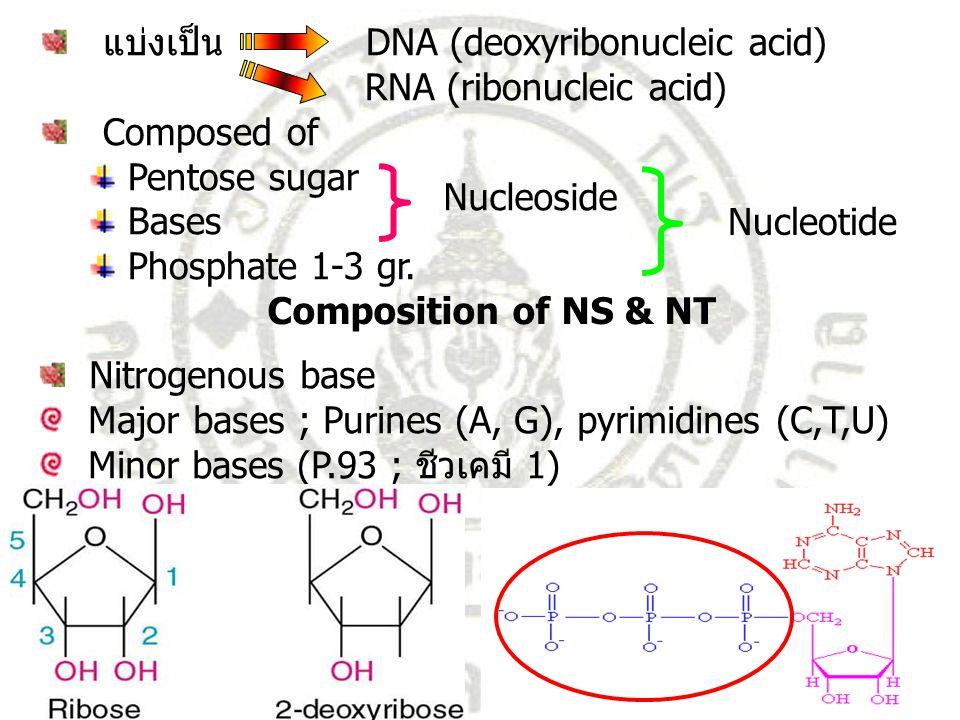 แบ่งเป็น DNA (deoxyribonucleic acid)