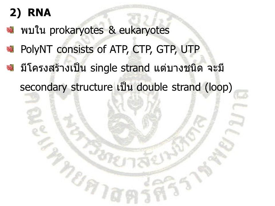 2) RNA พบใน prokaryotes & eukaryotes. PolyNT consists of ATP, CTP, GTP, UTP. มีโครงสร้างเป็น single strand แต่บางชนิด จะมี