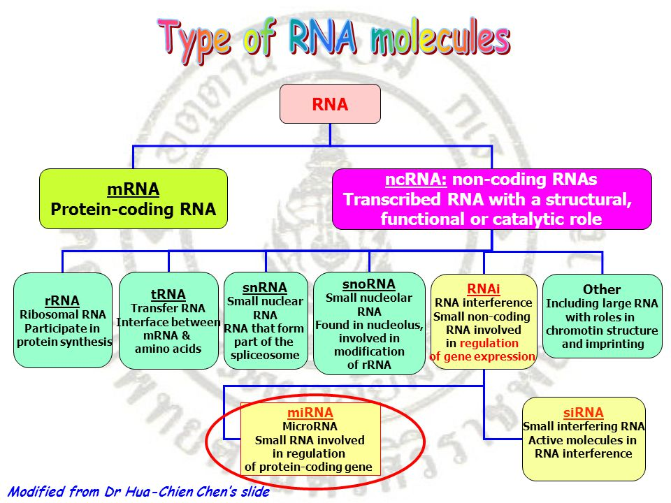 ncRNA: non-coding RNAs Transcribed RNA with a structural,