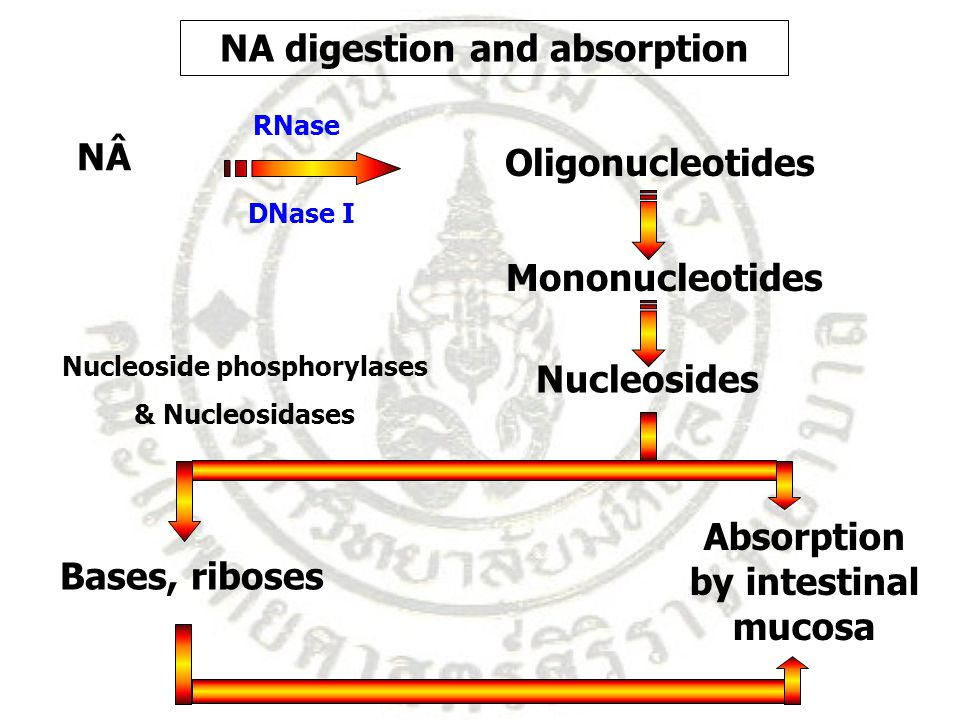 NA digestion and absorption