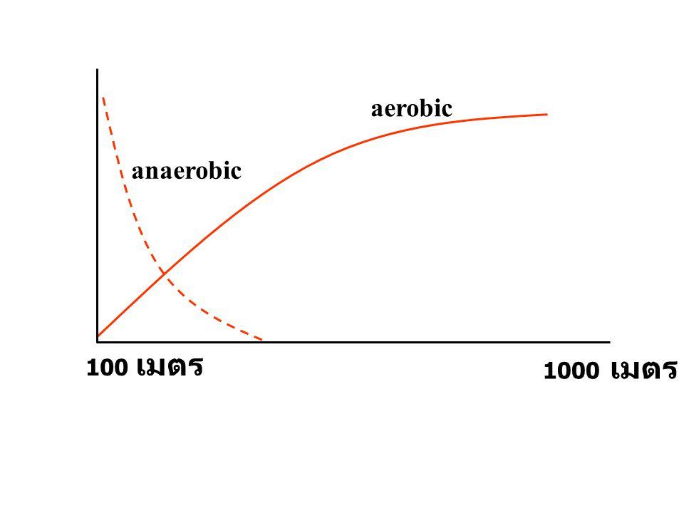 100 เมตร 1000 เมตร aerobic anaerobic