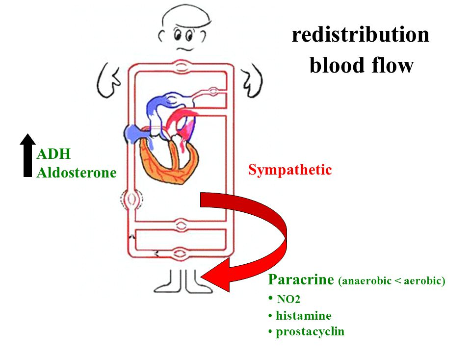 redistribution blood flow ADH Aldosterone Sympathetic