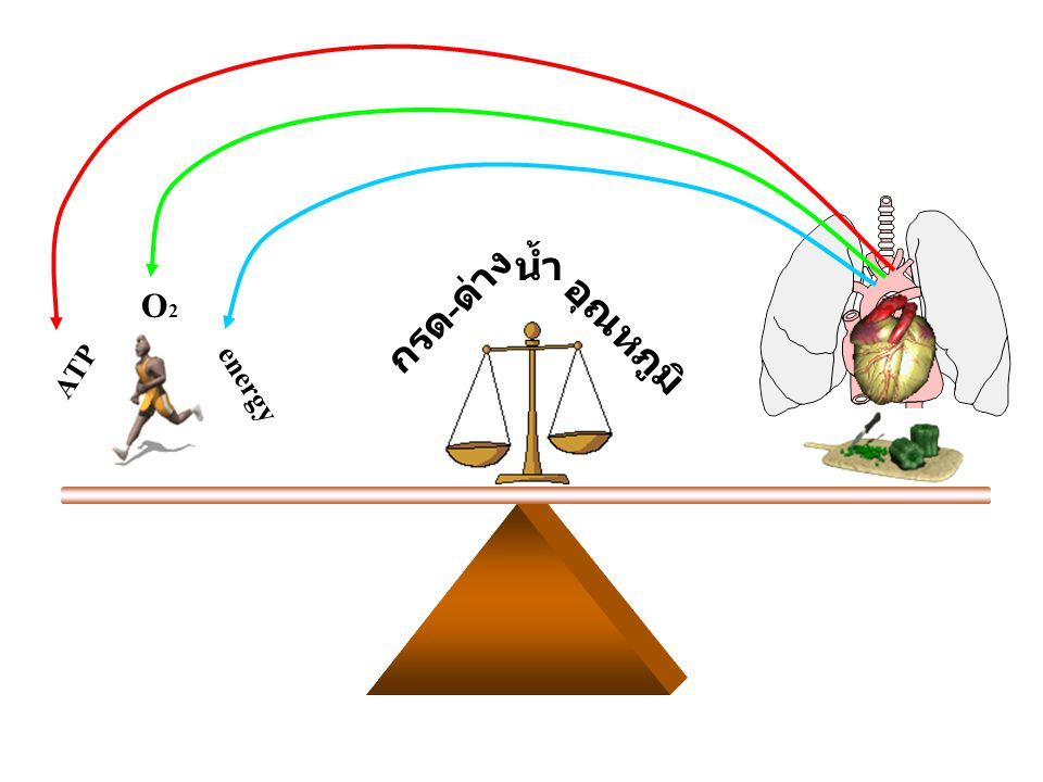 อุณหภูมิ กรด-ด่าง น้ำ ATP O2 energy